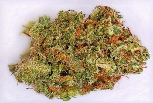 Buy Amnesia Haze strain   Buy weed online
