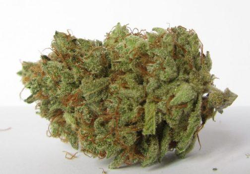 Chemdawg marijuana strain | Buy Marijuana online | Buy Weed online