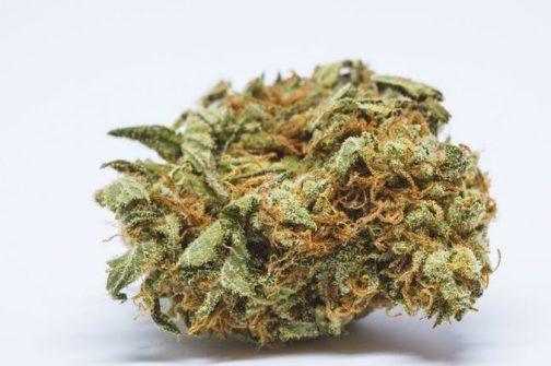 Chernobyl | Buy Marijuana Online | Buy Weed Online