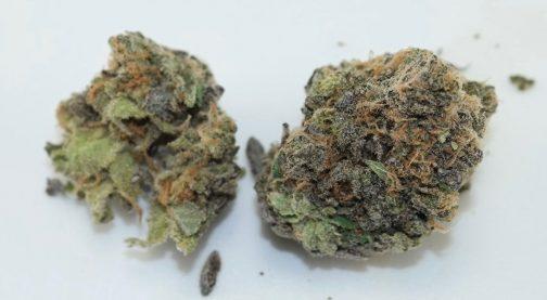 Cherry Pie marijuan strain | Buy Marijuana Online | Buy Weed Online