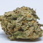 Buy Harlequin online, Sativa strain.