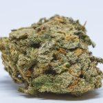 Cannabis Strains High in CBD
