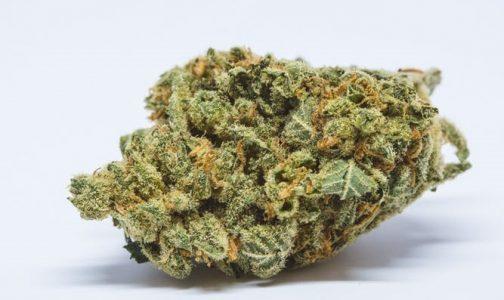 Mr. Nice is an Indica Strain | Buy Marijuana Online | Buy Weed Online