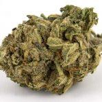 Purple Kush | Buy Marijuana online | Buy Weed online