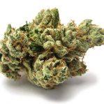 Buy SFV OG Kush online | An indica strain