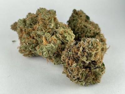Tutankhamon | Buy Marijuana Online | Buy Weed Online