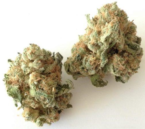White Widow strain | Buy Marijuana Online | Buy Weed Online