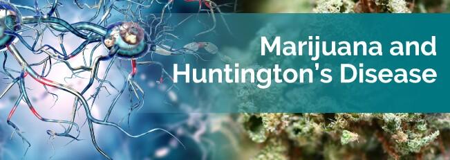 MEDICAL MARIJUANA: A PERFECT CURE FOR HUNTINGTON'S