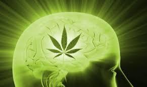 Medical Marijuana and CBD Oils for Migraines