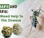 Marijuana and the Treatment of Malaria